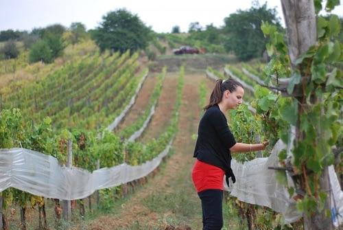 hungary wine field