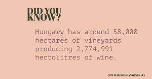 hungary wine - fact