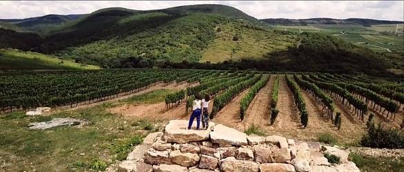 hungarian women wine feature