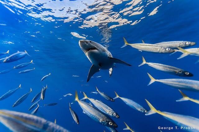 Ocean life: 5 Essential Reads